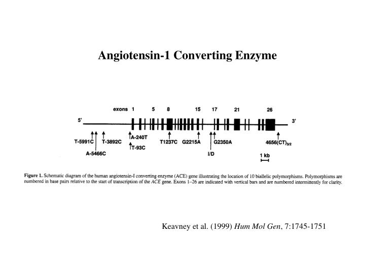 Angiotensin-1 Converting Enzyme