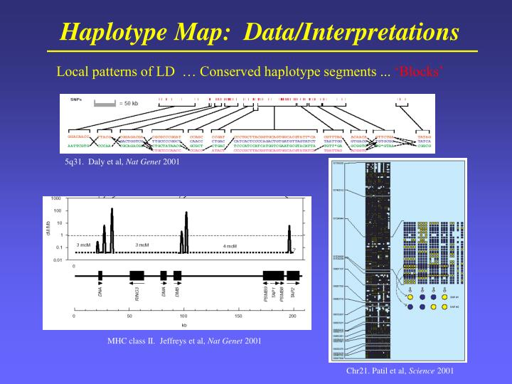 Haplotype Map:  Data/Interpretations