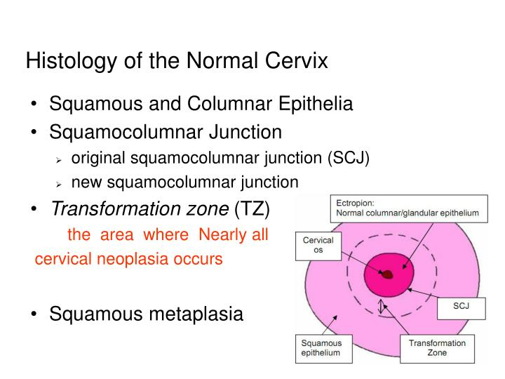 Histology of the Normal Cervix