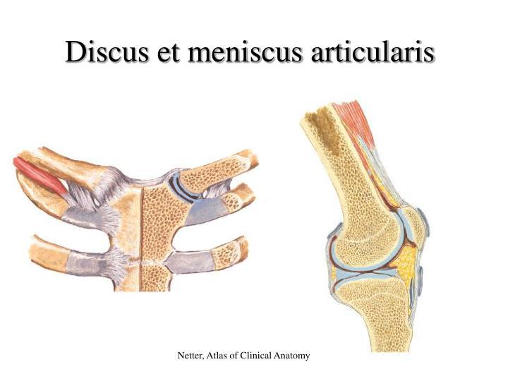 Discus et meniscus articularis