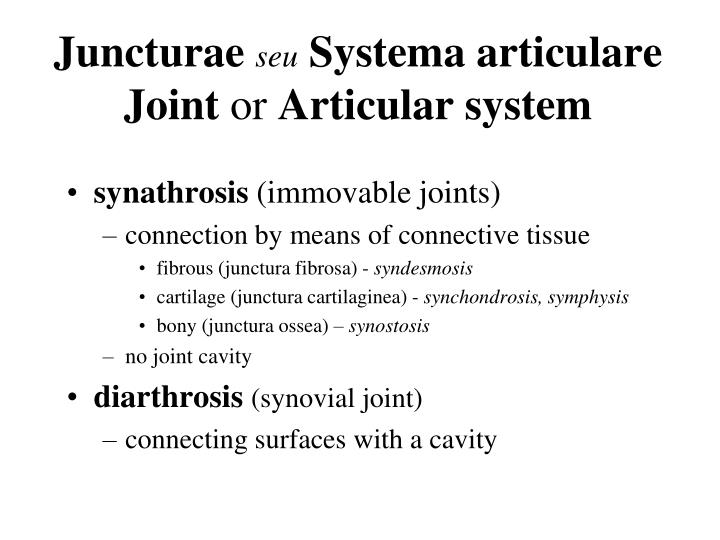 Juncturae seu systema articulare joint or articular system
