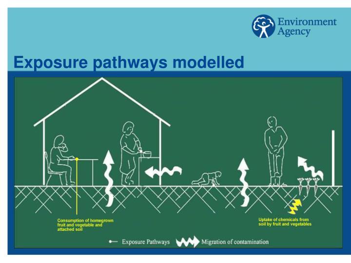 Exposure pathways modelled