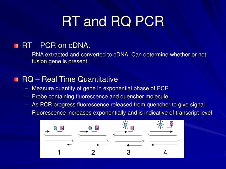 RT and RQ PCR