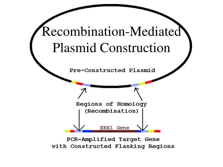 Recombination-Mediated Plasmid Construction