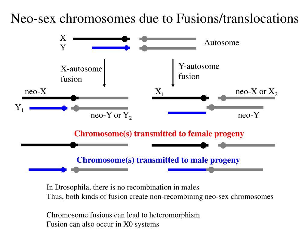 plant sex chromosome evolution in Quebec