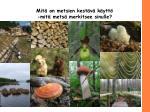 mit on metsien kest v k ytt mit mets merkitsee sinulle