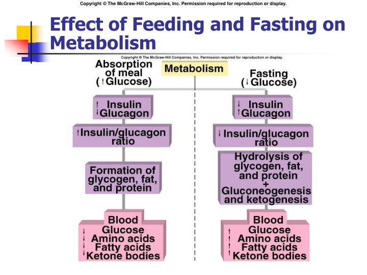 Effect of Feeding and Fasting on Metabolism