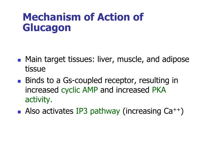 Mechanism of Action of Glucagon