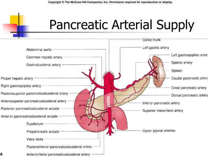 Pancreatic Arterial Supply
