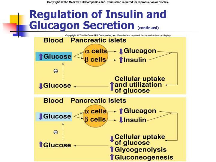 Regulation of Insulin and Glucagon Secretion