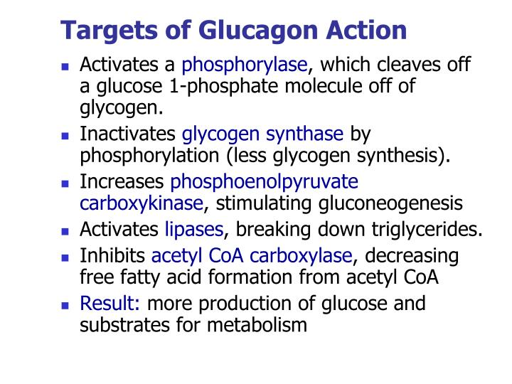 Targets of Glucagon Action