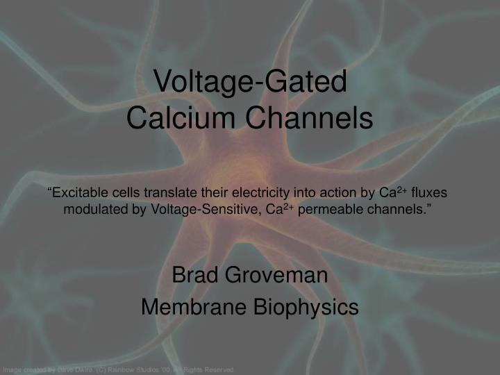 voltage gated calcium channels n.
