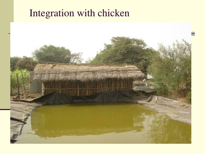Integration with chicken