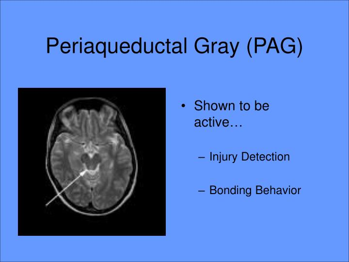 Periaqueductal Gray (PAG)