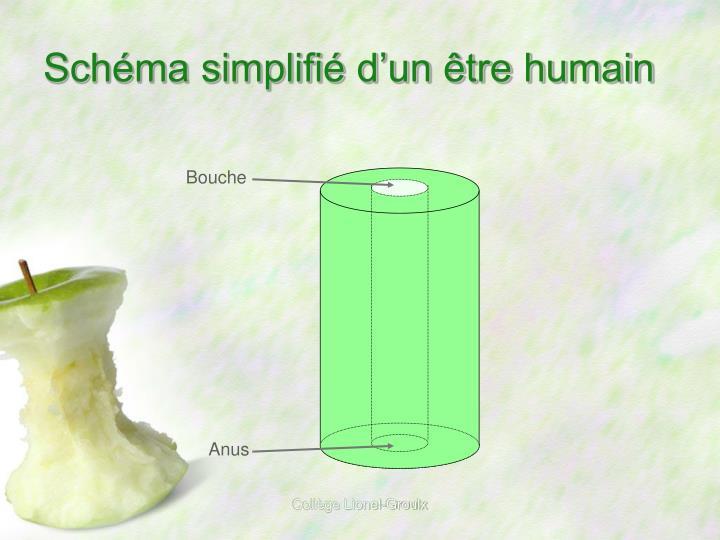 Sch ma simplifi d un tre humain
