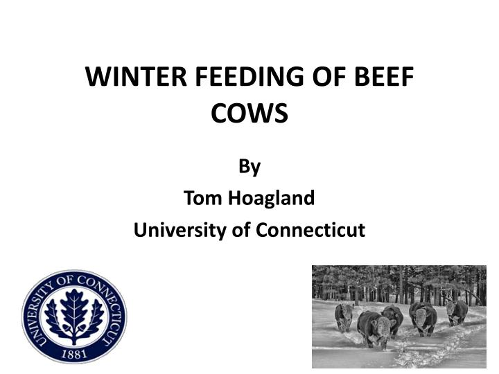 winter feeding of beef cows n.