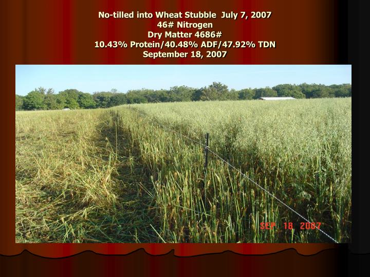 No-tilled into Wheat Stubble  July 7, 2007
