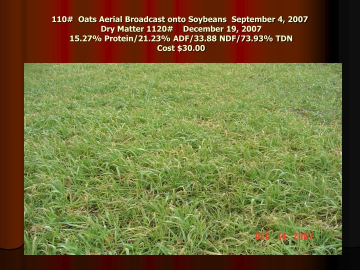 110#  Oats Aerial Broadcast onto Soybeans  September 4, 2007