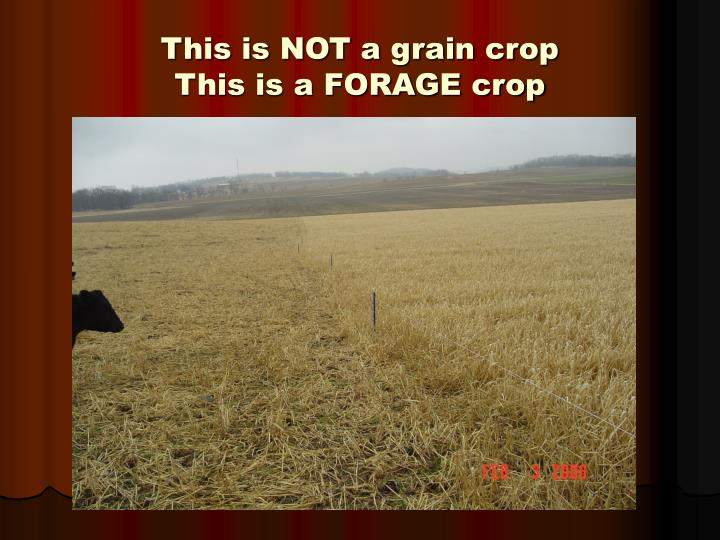 This is NOT a grain crop