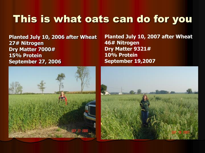 This is what oats can do for you