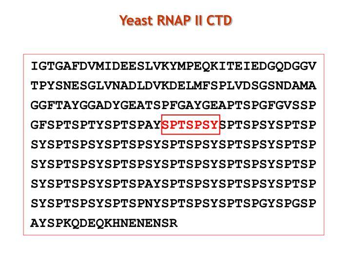 Yeast RNAP II CTD