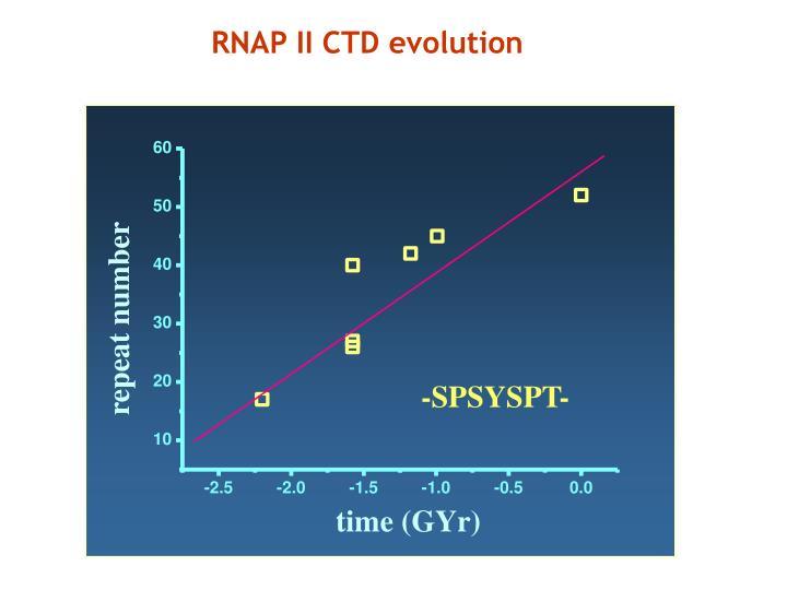 RNAP II CTD evolution