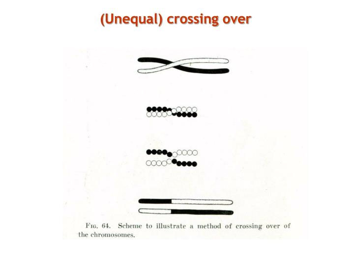 (Unequal) crossing over