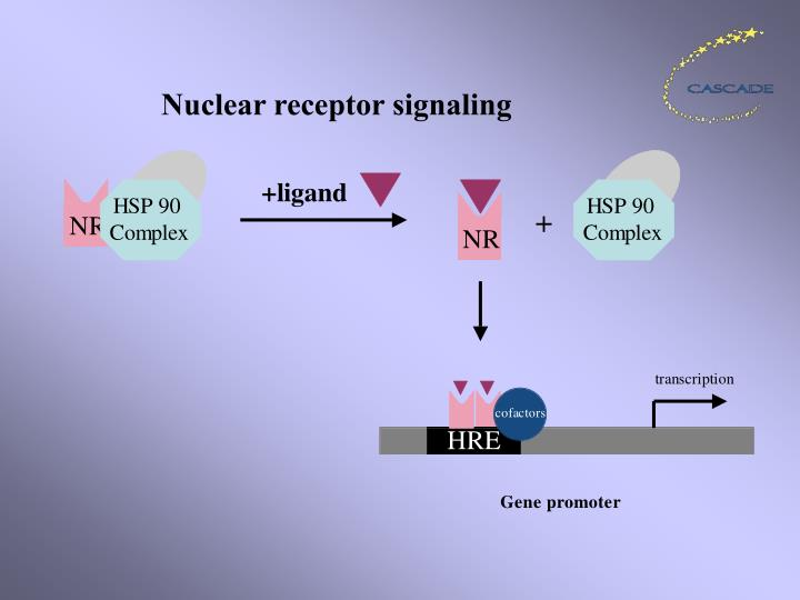 Nuclear receptor signaling