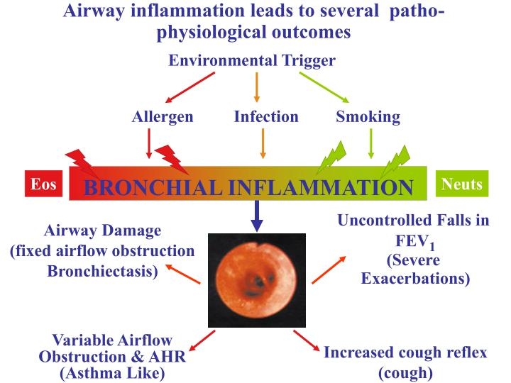 Airway inflammation leads to several patho physiological outcomes
