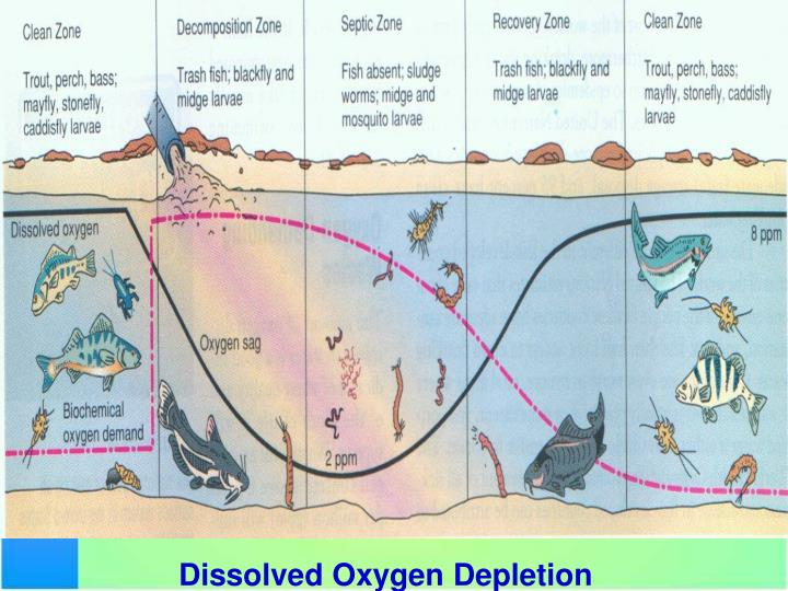 https://image1.slideserve.com/3381525/dissolved-oxygen-depletion-n.jpg