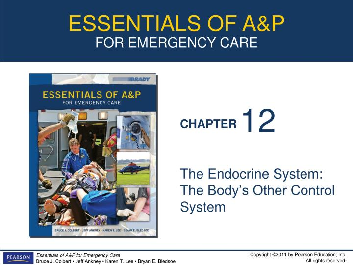 the endocrine system the body s other control system n.