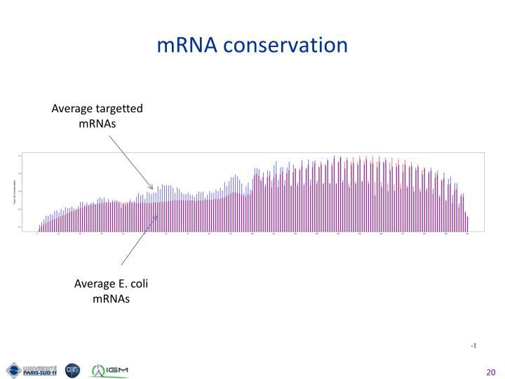 mRNA conservation