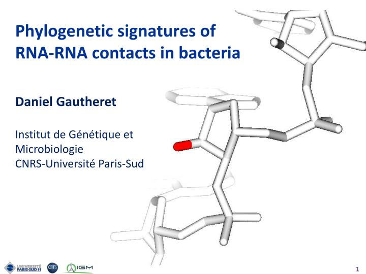 Phylogenetic signatures of rna rna contacts in bacteria
