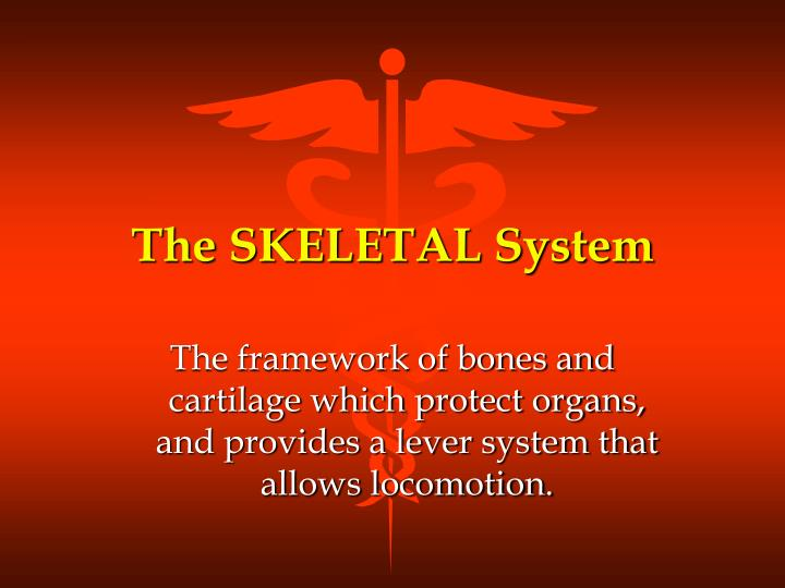 the skeletal system n.