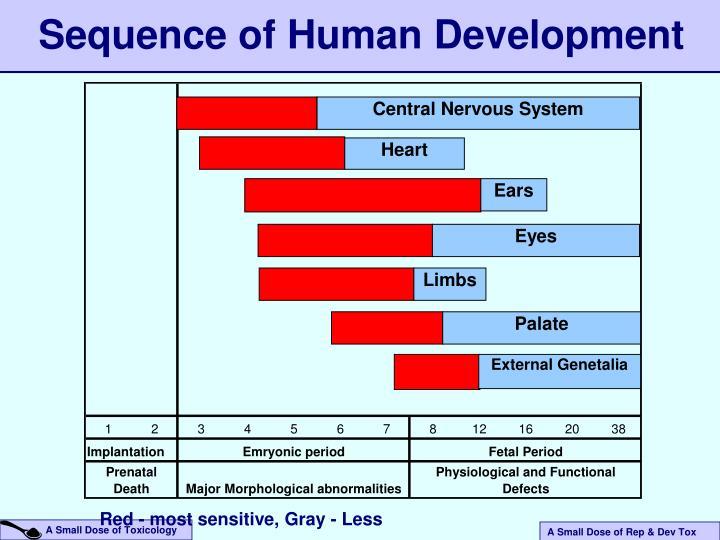 Sequence of Human Development