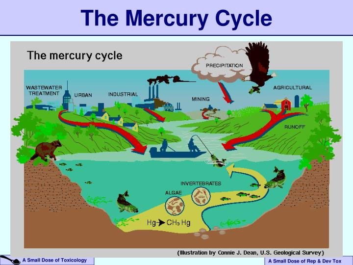 The Mercury Cycle