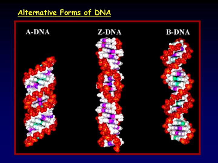 Alternative Forms of DNA