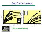 pecb in a nanus