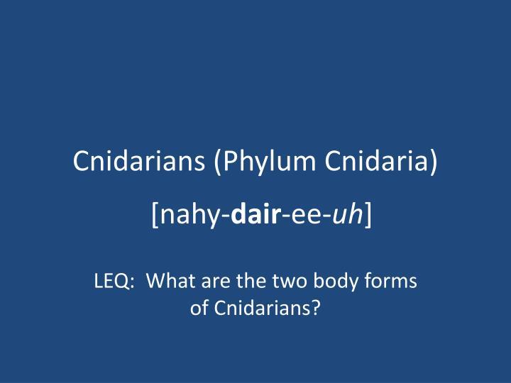cnidarians phylum cnidaria n.