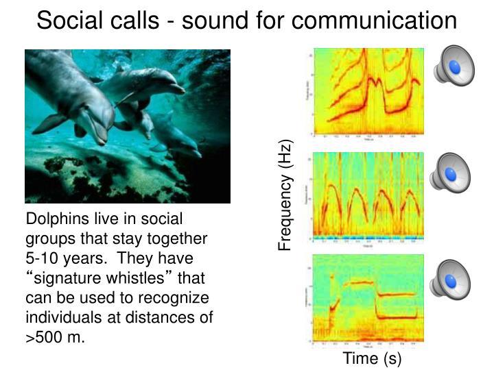 Social calls - sound for communication