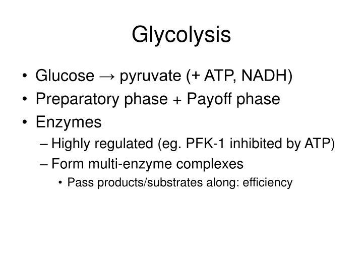 glycolysis n.