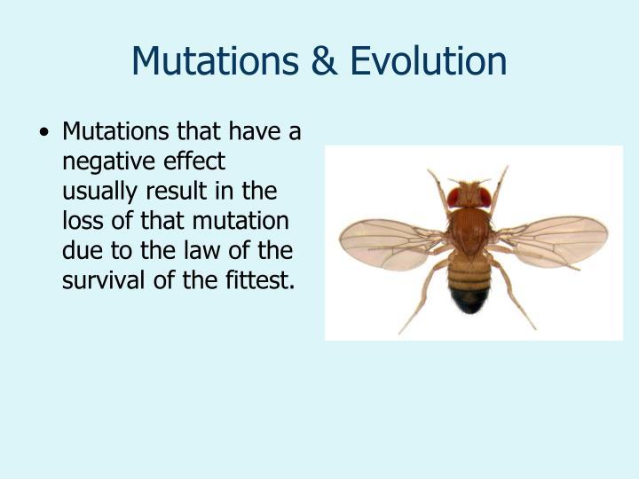 Mutations & Evolution