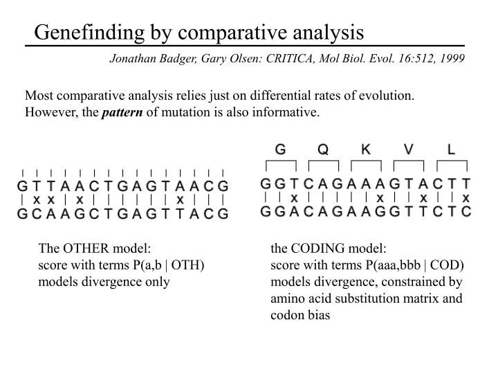 Genefinding by comparative analysis