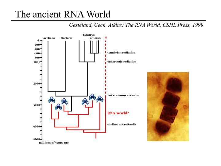 The ancient RNA World