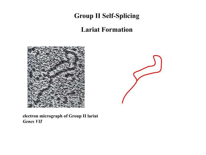 Group II Self-Splicing
