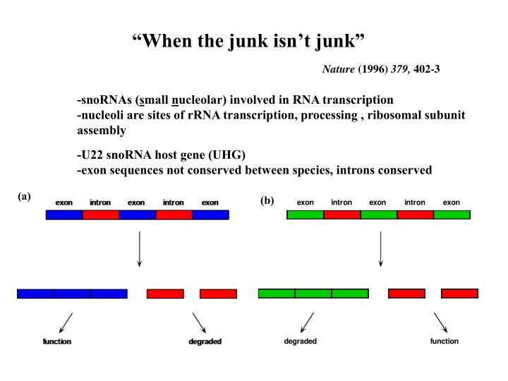 """""""When the junk isn't junk"""""""