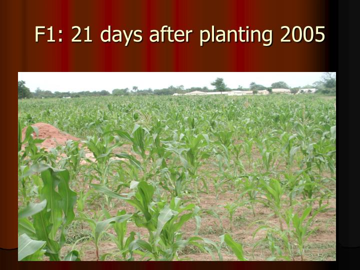 F1: 21 days after planting 2005