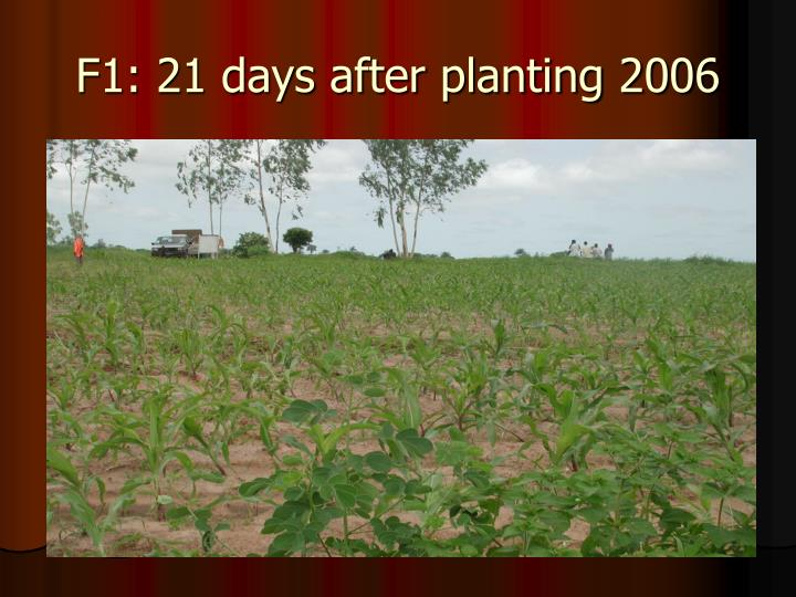 F1: 21 days after planting 2006