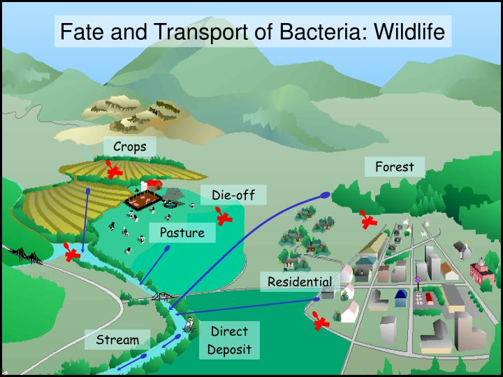 Fate and Transport of Bacteria: Wildlife
