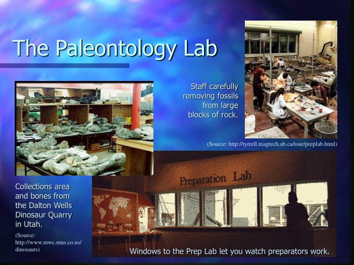 The Paleontology Lab